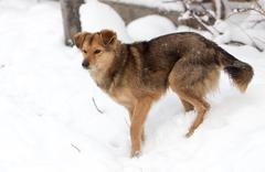 dog portrait outdoors in winter - stock photo