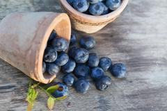Fresh ripe Blueberries crop in garden Stock Photos