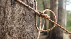 Rope pulled tight around tree Stock Footage