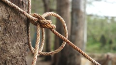 Rope Tightened Around Tree Trunk Stock Footage