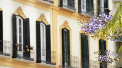 Jacaranda flower with open balconies in building of old town of Malaga, Spain Stock Footage