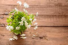 Bouquet of flowers snowdrop Anemone Stock Photos