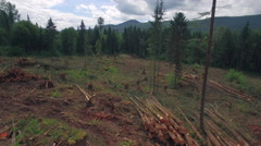 Aerial Pan of Clear Cut Deforestation Scene with Piles of Fresh Cut Trees - stock footage