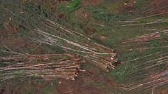 Aerial of Tree Piles from Forest Clear Cutting Rotating Upward Stock Footage