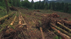 Deforestation Aerial of Trees in Piles at Clear Cutting for New Homes Arkistovideo