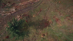 Overhead Aerial of Clear Cut Logging Road with Piles of Trees - stock footage