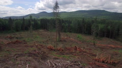 Wide Aerial of Deforestation Clear Cutting with Piles of Trees Arkistovideo