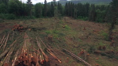Piles of Clear Cut Timber Trees in Deforestation Aerial Stock Footage