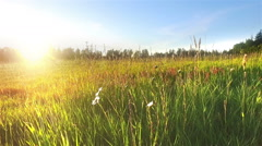 Sunset at the field with tall grass. Stock Footage