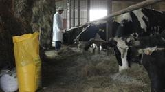 Catlle farm ,zeolite supplement feeding of livestock Stock Footage