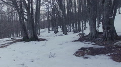 A wolf runs in a snowy forest on the mountains. Drone video. N. Stock Footage