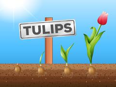 Tulips growing from underground Stock Illustration