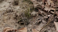 Toad in the Forest 03 Stock Footage