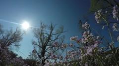 smock in springtime - stock footage