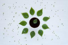Black coffee and green leaves on white background Stock Photos