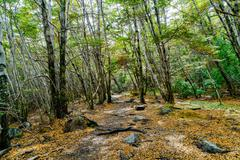 Sparse forest in Torres del Paine National Park Stock Photos