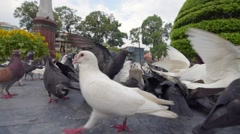Close up view of feeding pigeons at city downtown Stock Footage