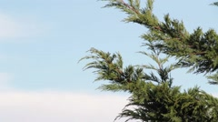 View of some tree branches moving on the wind. Stock Footage