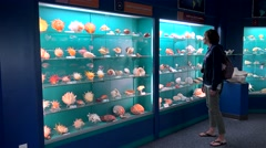 Girl in the Shell Collection exhibition hall of Bermuda Underwater Institute Stock Footage
