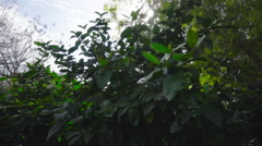 View of green trees and sunlight in forest area - stock footage