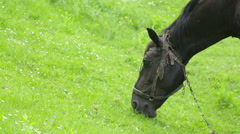 Horses graze in the meadow Stock Footage