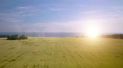 AERIAL: Low flight over green and yellow wheat field - stock footage
