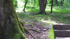 Squirrel in the forest. Stock Footage