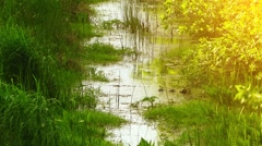 Quiet steady stream flowing in grass Stock Footage