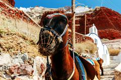 Donkeys for horse riding in the village Oia - stock photo