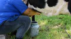 The woman milks the cow. Stock Footage