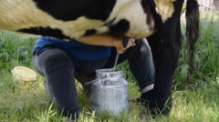 The woman milks the cow Stock Footage