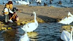 Mother and the little daughter feed swans Stock Footage