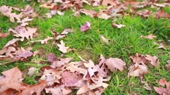 Great shot of leaves lying down in green grass Stock Footage