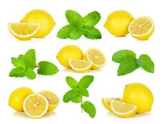 Fresh mint isolated on the white background Stock Photos
