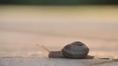Snail walking at sunset Stock Footage