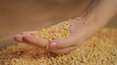 Dried split peas dropping in hand, high quality food product, organic farming Stock Footage