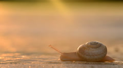 Snail dragging its shell on the tarmac at sunset - stock footage