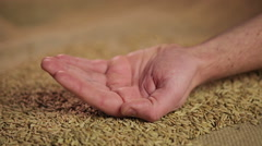 Hand of hard-working male farmer holding rye grain with pride, good harvest Stock Footage