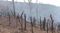 Clearing land with Fire Stock Footage