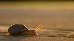 Snail dragging its shell on the tarmac at sunset Stock Footage