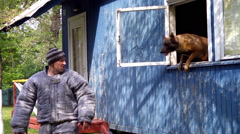 Malinois jumping out of the window and attacking the perpetrator Stock Footage