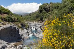 Alcantara gorge with yellow broom flowers at Sicily, Italy Stock Photos
