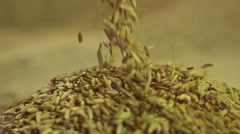 Select rye grain pouring in pile at processing enterprise, agriculture industry - stock footage