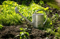 Stainless watering can on garden bed with growing lettuce Kuvituskuvat