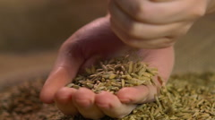 Female hands holding select organic rye grain, showing good quality of harvest Stock Footage