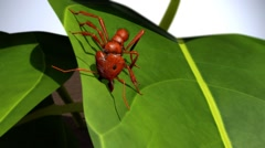 Ant cutting leaf Stock Footage