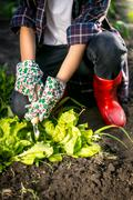Woman in gloves working in garden with metal spade Stock Photos