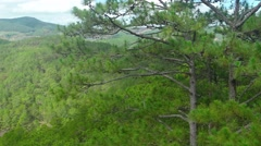 Upper Limbs and Branches of Pine Trees Passing By. Video UltraHD - stock footage