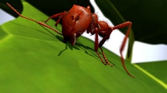 Ant cutting leaf. Close up. Stock Footage