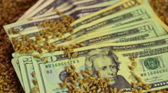Wheat seeds dropping on paper money, lucrative business, food grain export - stock footage
